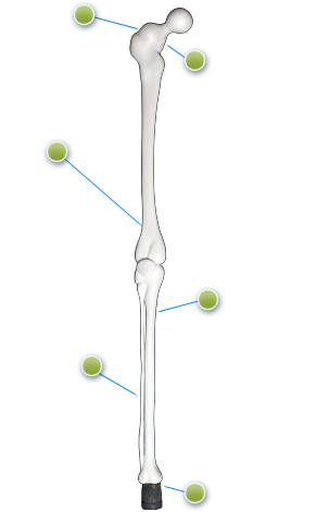 My 3rd Leg's Bone Cane